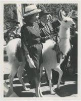 South American Fortnight, 1959. ''Llinda Llee,'' llama., 1959, DeGolyer Library, SMU.