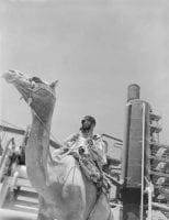 [Man on Camel, Aramco Refinery], ca. 1946, DeGolyer Library, SMU.