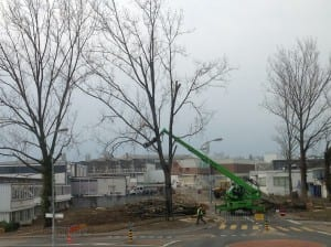I thought I'd show a later photo of the tree removal at CERN. This was quite an operation, involving grabbing high branches, cutting them off, and removing them slowly, and men on the ground chainsawing the remaining tree to the ground and cutting it into smaller, more manageable pieces to be organized in piles.