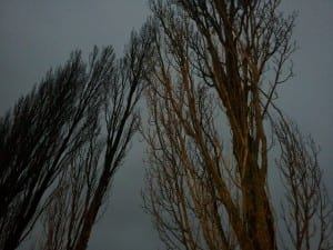 Some of the tall trees lining the Feynman Road along the south side of CERN. Taken at dusk.