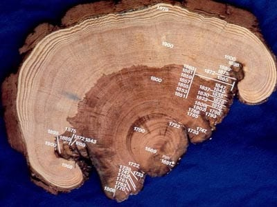 Christopher Roos, fire scar, tree ring, ancient fire, Medieval Warm Period, Little Ice Age, anthropology, SMU