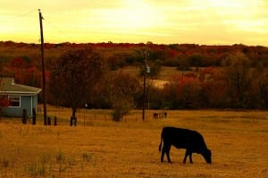 bucolic azle texas daniel james