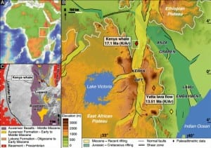 A map of Africa and Kenya showing where a 17-million-year-old whale fossil was found far inland . (Wichura/PNAS)