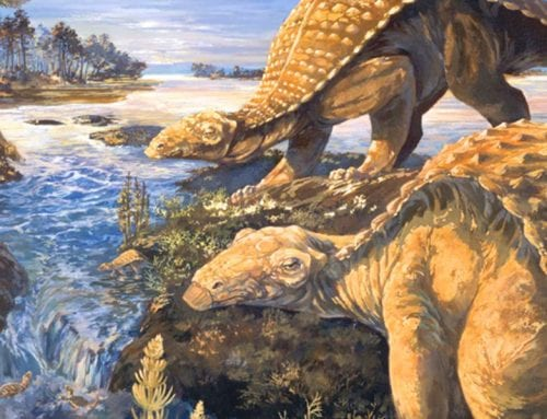 Laser Beats Rock:  Armored Dinosaur May Have Relied Most on Sense of Smell