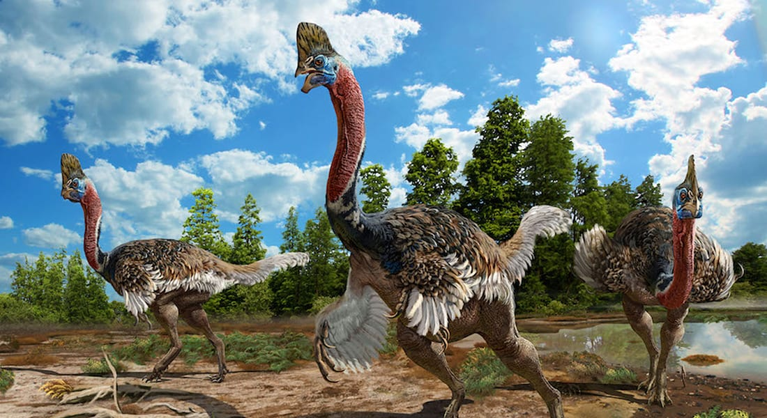 LiveScience: Newfound dino looks like creepy love child of a turkey and ostrich