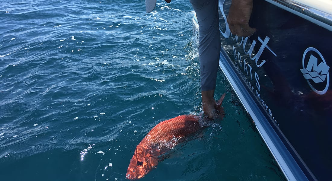 Commerce Department selects scientific team to conduct independent abundance estimate of red snapper in Gulf of Mexico
