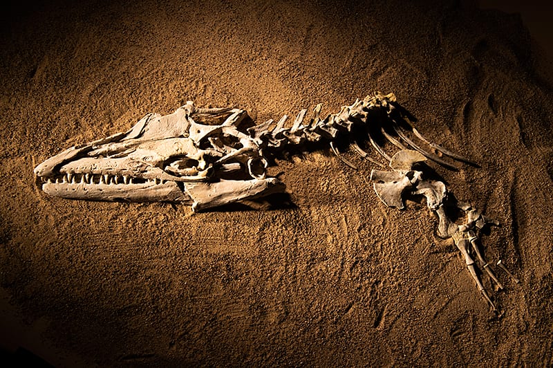"Ancient ""Sea Monsters"" Reveal How the Ever-Changing Planet Shapes Life, Past and Present"