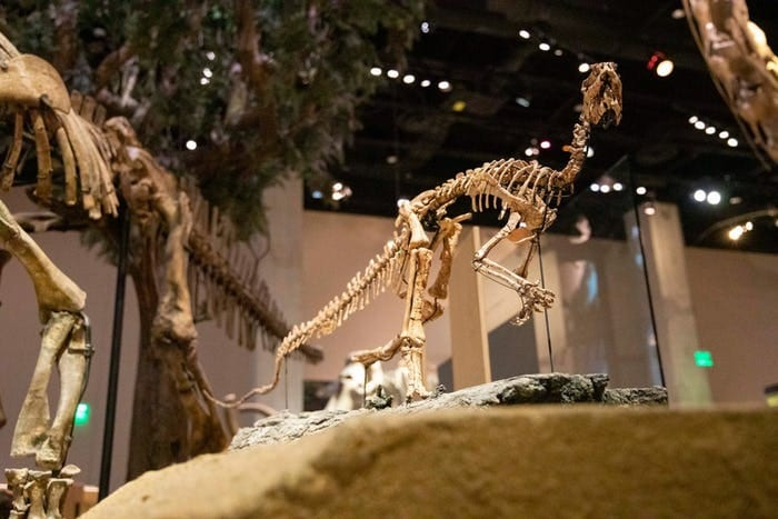 New Texas Dinosaur Identified by SMU Scientists