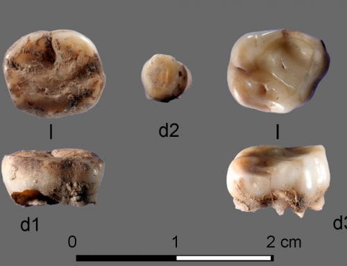 DNA from 31,000-year-old human teeth reveals new ethnic group living in Siberia during last Ice Age