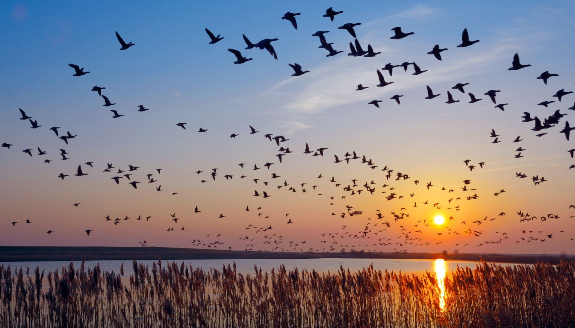 Why do birds migrate at night?