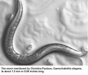- caenorhabditis-elegans