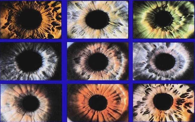 Iris%20variations.jpg