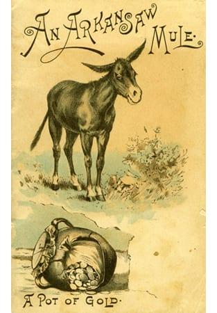 Askansas Mule