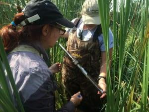 Dr. Lisa Grubisha (left) and UW - Green Bay senior Kathi Arnold collect soil cores.