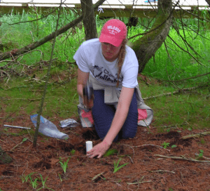 Lydia Deweese collecting soil cores at the Ridges Sanctuary.