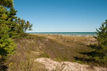 Beach habitat