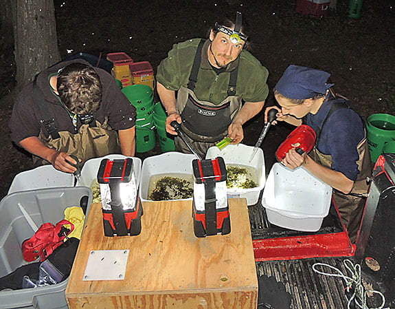 Recent graduate, Dave Lawrence MS, sorting larval sturgeon captured in larval drift nets.