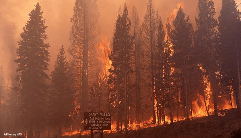 YellowstoneFire1988Trees_JeffHenryNPS_840x480