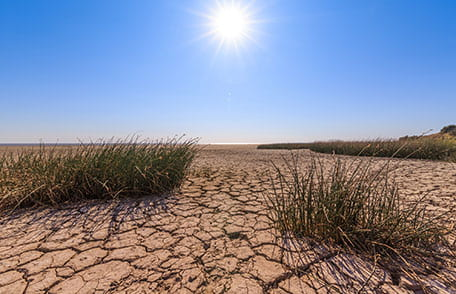 drought_456px