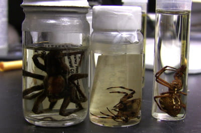 Arachnophilia: UW-Green Bay's 'spider man' shares love of creeping critters