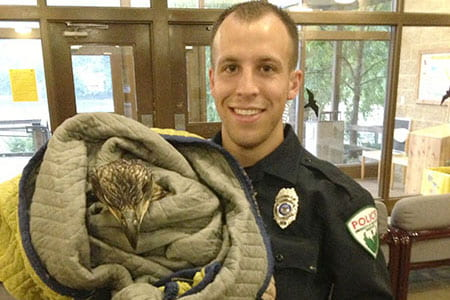 Avian arrest: UW-Green Bay Police rescue injured eagle on Arboretum Trail