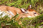 Snapshots: Spotted fawn spotted