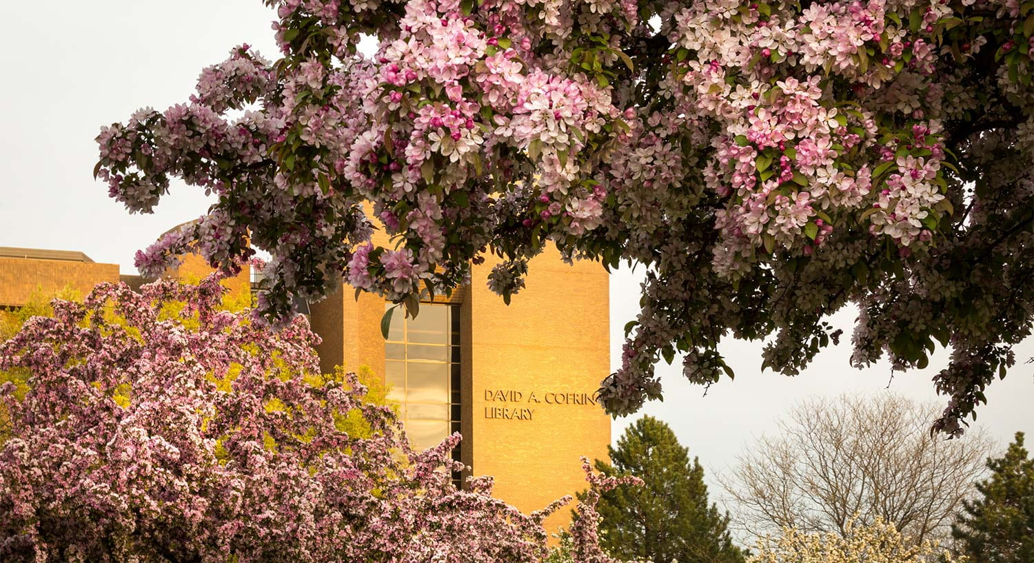 Spring Campus Flowers Cofrin Library