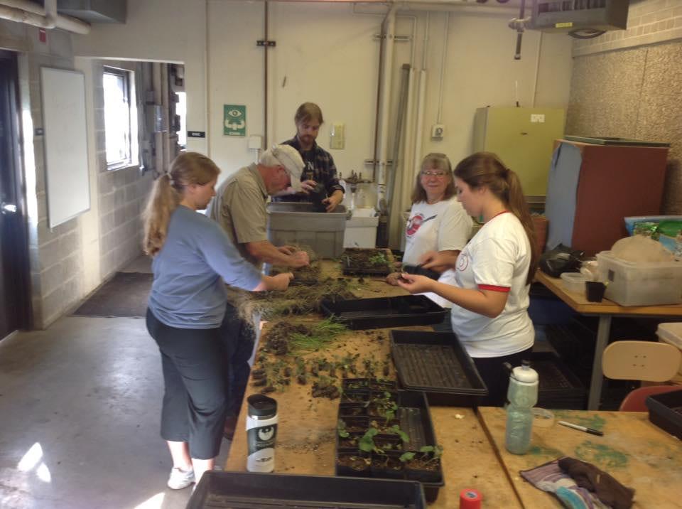 Students working on Cofrin arboretum plugs