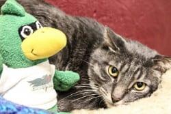 Tabby cat with plush Phlash Phoenix