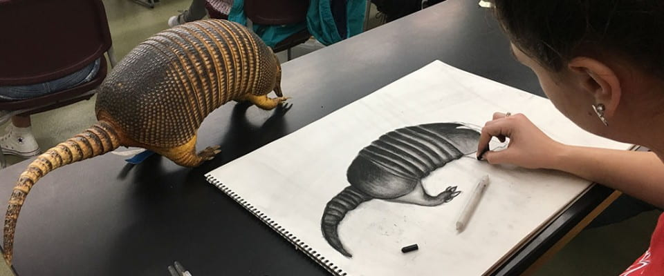 Student drawing and armadillo in the Richter Museum