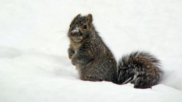 UWGB Squirrel
