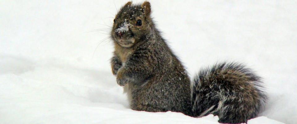 UWGB Squirrel