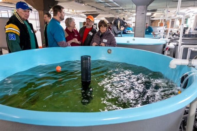 Visitors peer into the large fish tank to see the yellow peach during The Farmory grand opening of the perch fish hatchery in Green Bay.