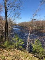 Little Cedar River, May 20, 2020