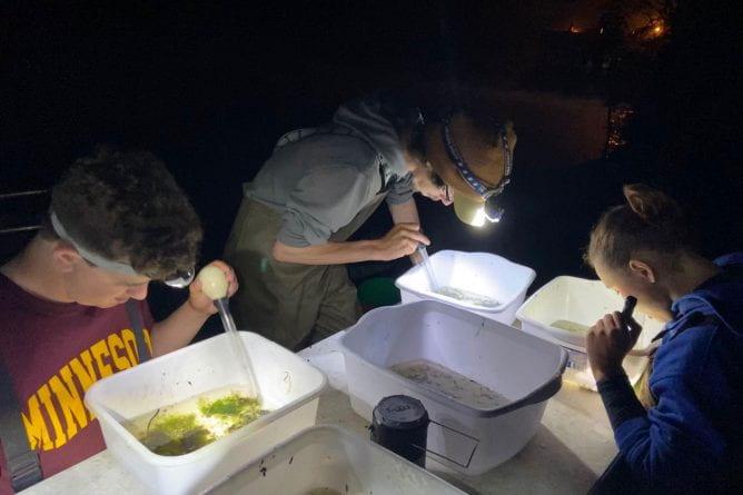 Fish Hatching Photo