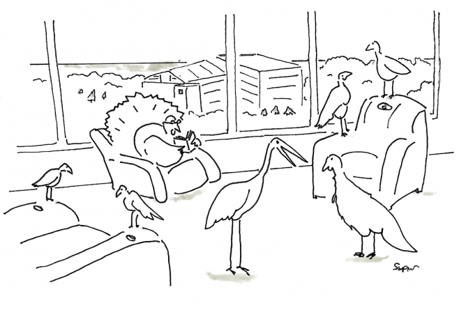Cartoon contest: What did the sandhill crane say to the turkey?