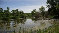 UW-Green Bay Arboretum Pond Zoom Background