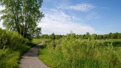 UW-Green Bay Arboretum Trail Zoom Background