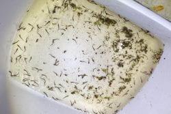 Fish Hatching