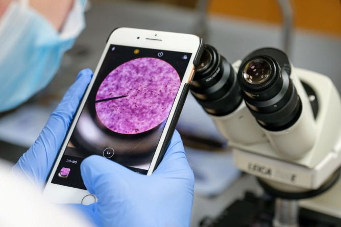 A close up photo of a student using their smartphone to take a photo of the bacteria scene in their microscope in Advanced Microbiology class, as they exam soil to distinguish and classify bacterial species in the Biology Lab inside Lab Sciences Building at the UW-Green Bay campus on October 21, 2020.