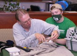 Greg Septon and Max Stafford banding falcons