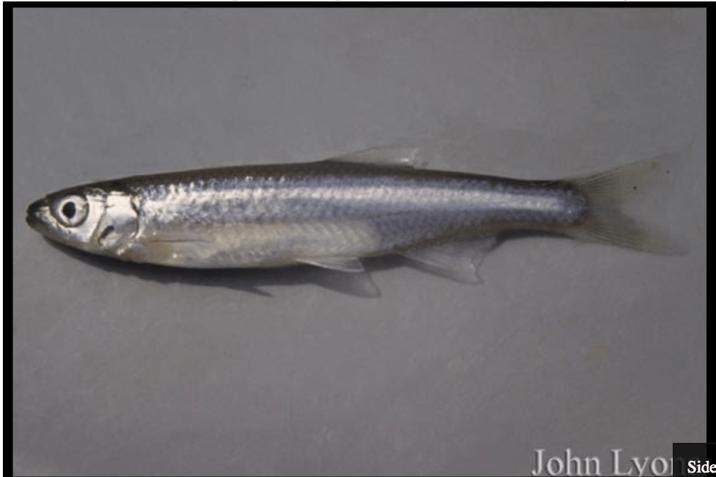 Sea Grant – University of Wisconsin/NOAA