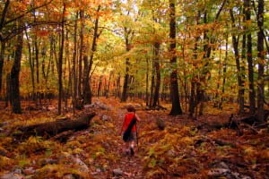 bright-fall-colors-hiking-trail