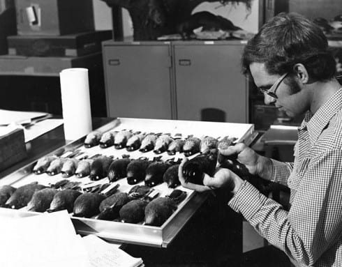 Photo Memory 25 - Man taking measurements of a stuffed bird specimen in the Richter Collection