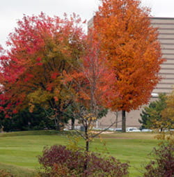 Shorewood Golf Course fall colors