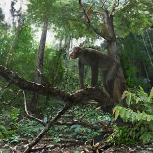 Eighteen million years ago on the flanks of the Kisingiri Volcano (modern day Rusinga Island, Kenya) the early ape Proconsul (center) and the primate Dendropithecus (upper right) inhabited a warm and relatively wet, closed canopy tropical seasonal forest.