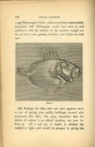 aratra-pentelici-fish007