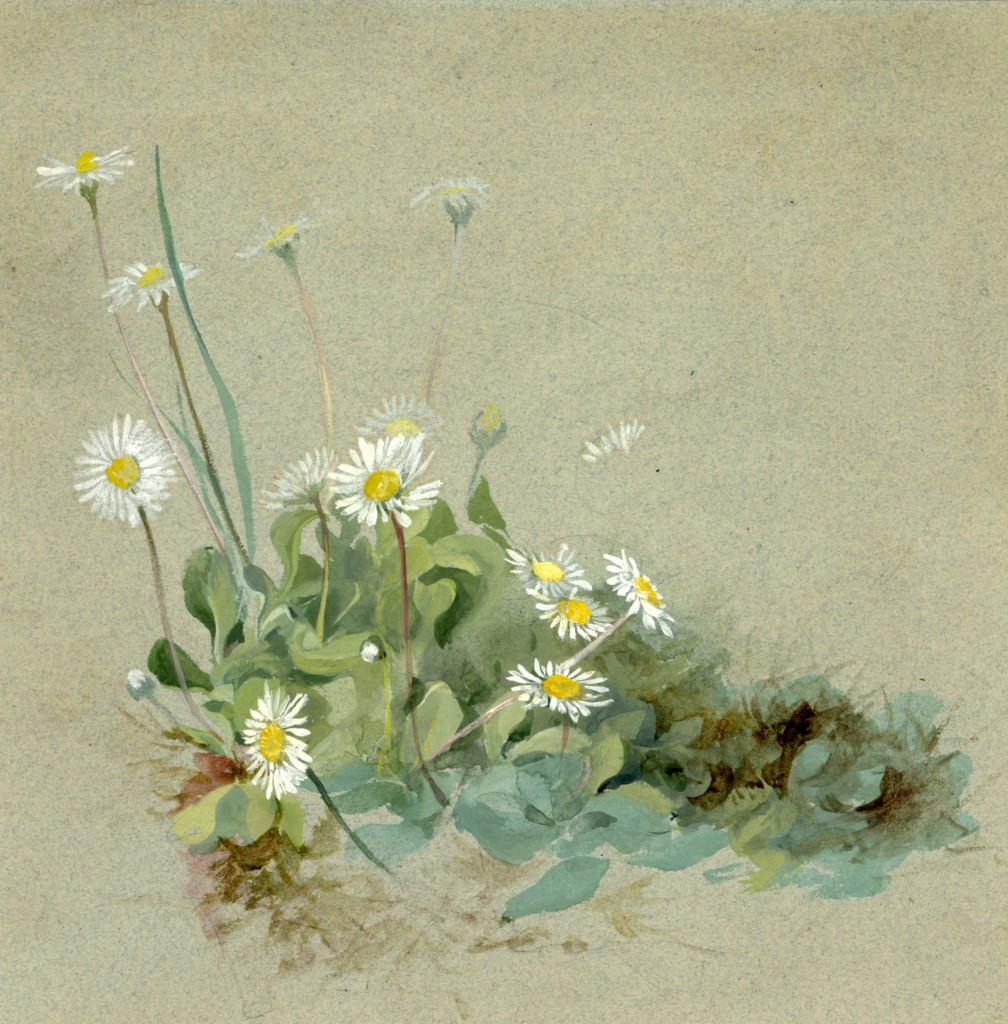 Lilias Trotter. Daisies. Courtesy of Ruskin Library.