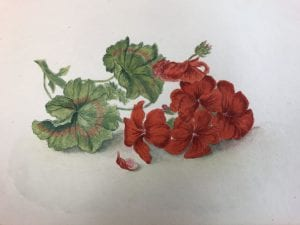 Fig. 5, Red Geranium watercolor from E.F.C.'s Flowers Culled from Browning's Poems (DATE), Armstrong Browning Library