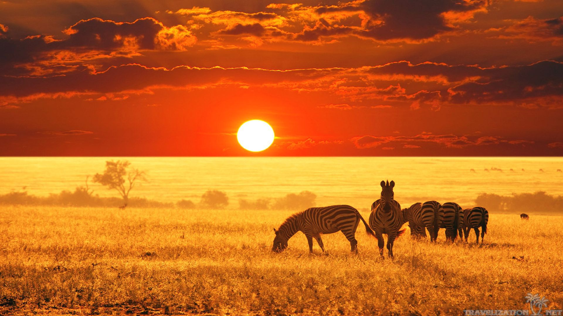 Gorgeous Scenary African Safari Wallpapers 1920x1080